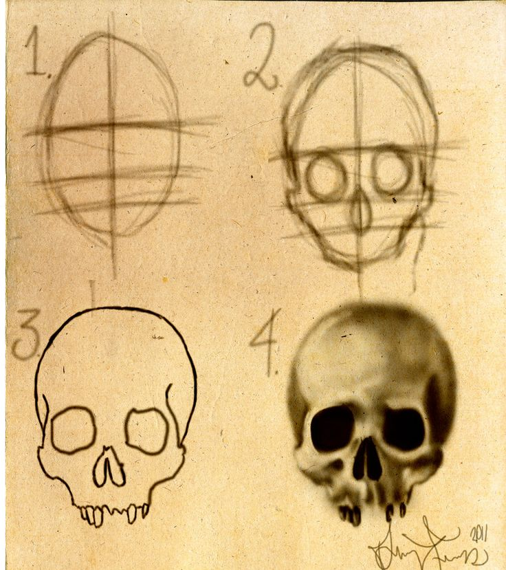 How to draw a skull Stepbystep by