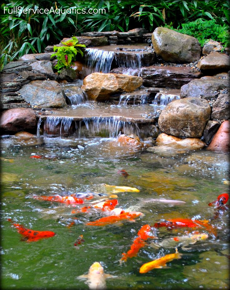 Waterfall With Koi Swimming Beneath It Designed And