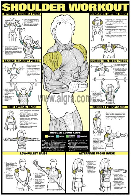 Bruce Algras Shoulder Workout Poster presents the most effective weight training exercises to develop the