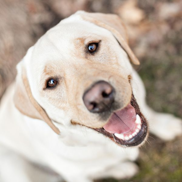 Happy Tails Marley Pets Happy And Portrait