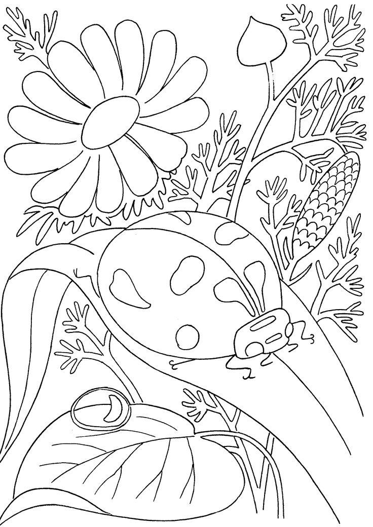 insects coloring pages pdf de colorat pentru copii