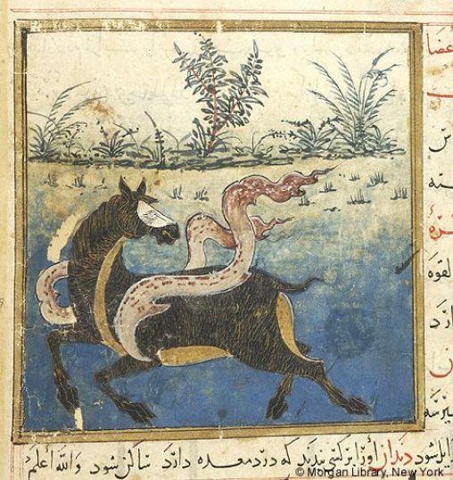 Image result for medieval manuscript mule