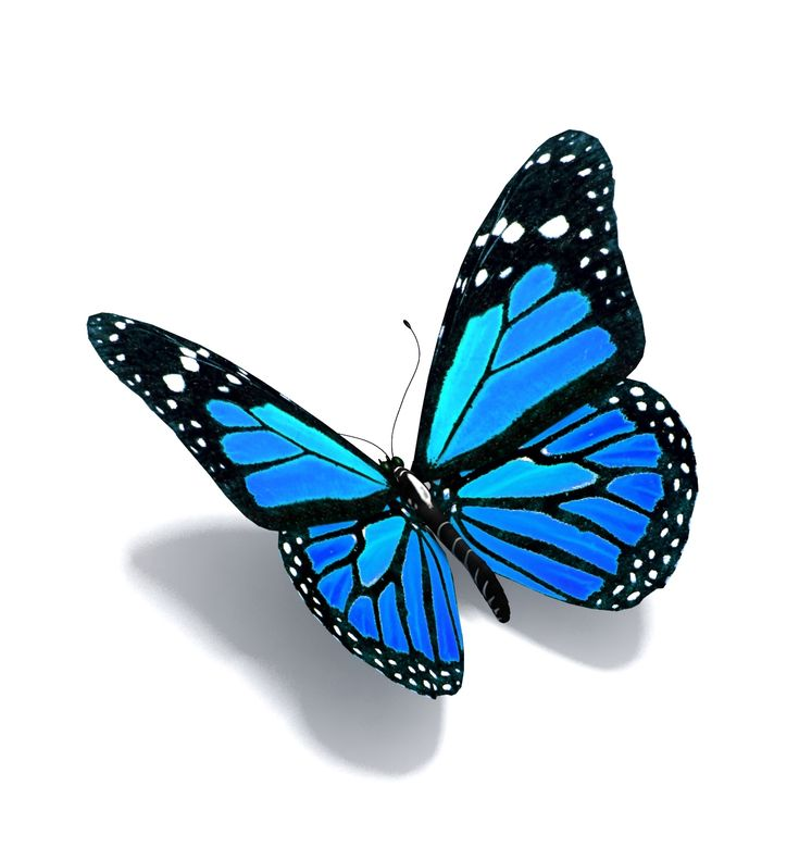 blue butterfly images hha open house page mcleod health foundation