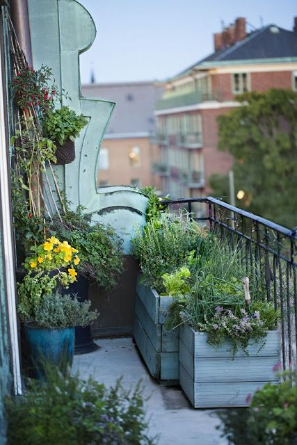 17 Best Images About Balcony Container Gardening On