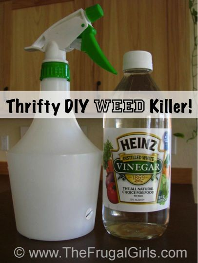 Thrifty DIY Weed Killer Trick!  Just put undiluted vinegar in a spray bottle, sp