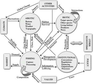 32 best images about Ecosystems (systems thinking) on