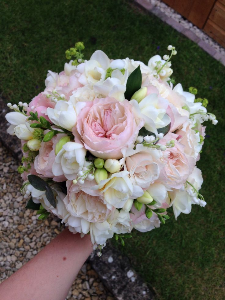 57 Best Images About Secret Garden Rose On Pinterest