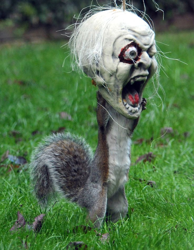 A Squirrels Halloween Weird and Freaky and Scary