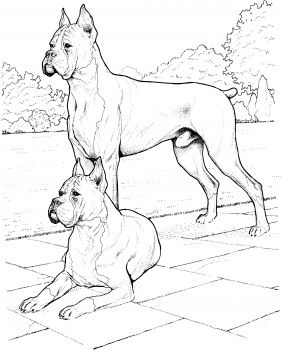 Two Boxer Dogs Favorite Dog Colouring Pages Pinterest