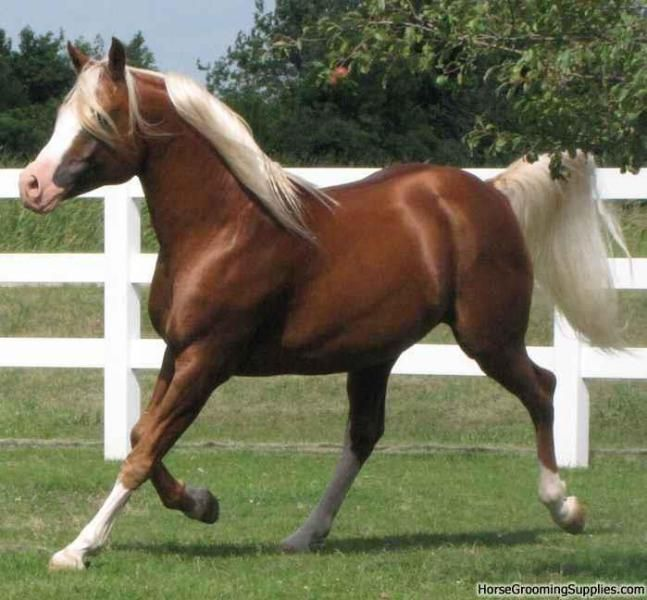 horse coloring along with along with beautiful horse coloring pages