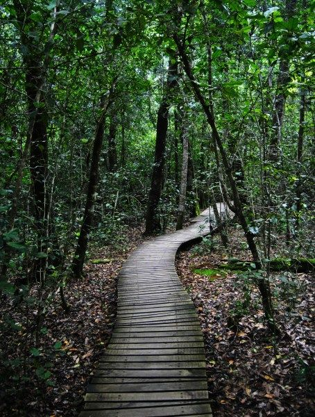 Tsitsikamma Rain Forest. This is so beautiful and peaceful