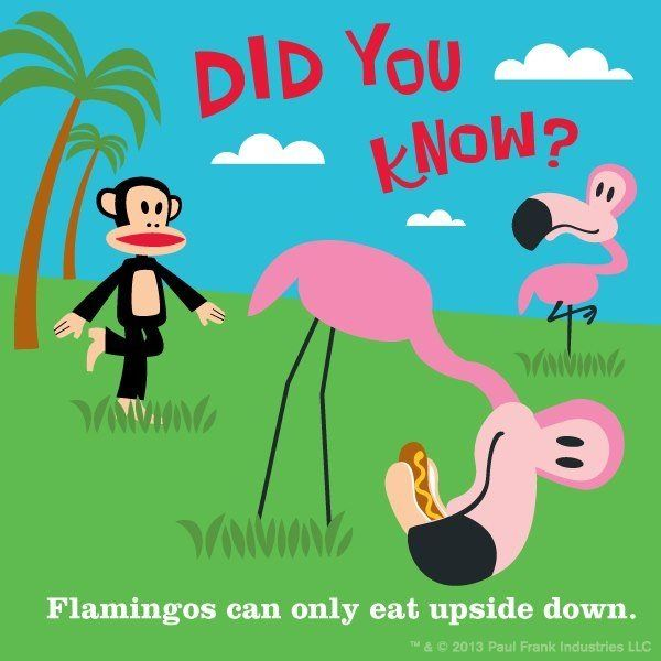 Flamingos Can Only Eat Upside Down Flamingoslove Them