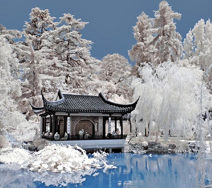 A Chinese Winter Garden...This is so beautiful!Reminds me