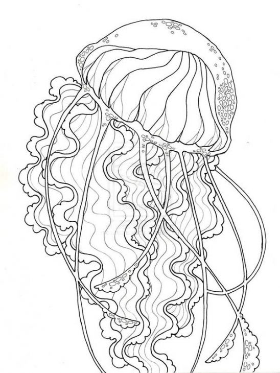 coloring pages coloring pages for adults and jellyfish on pinterest