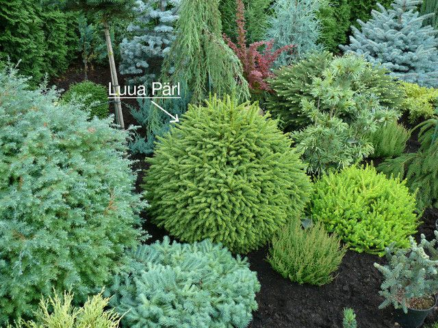 Landscaping With Evergreen Trees And Shrubs Small Small And