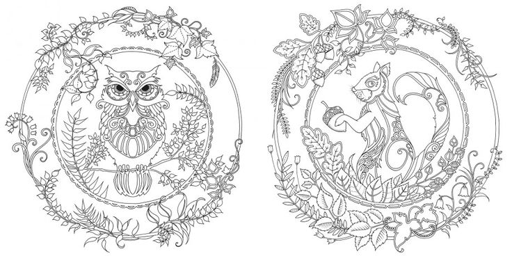 enchanted forest an inky quest & colouring book
