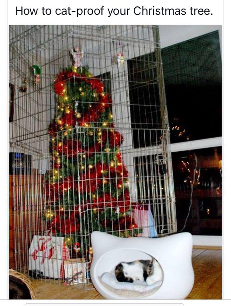 Pin by Tonya Beasley on CATS & CHRISTMAS Pinterest Lol