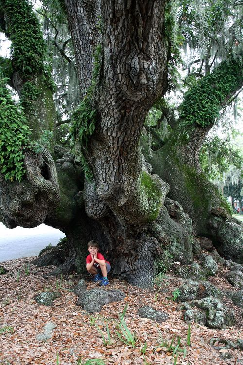 Arborist Charleston Sc