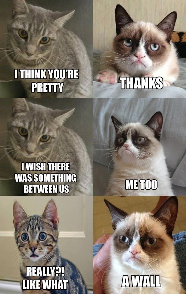 omg grumpy cat so cute much cute grumpy cat Pinterest