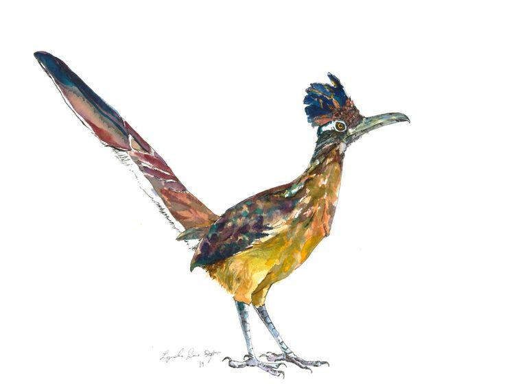 Greater Roadrunner Ink Watercolor Pinterest