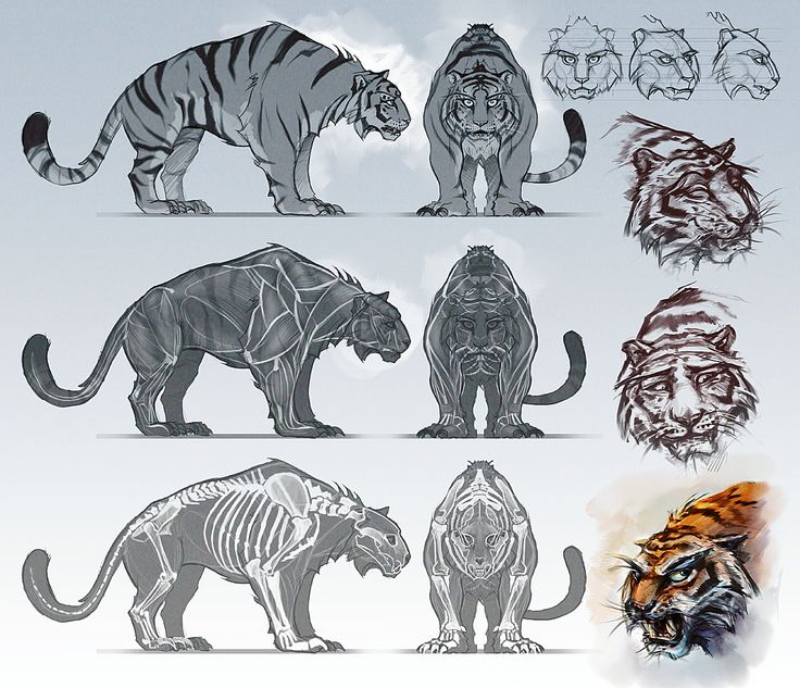 Animal blueprint model sheet anatomia Pinterest