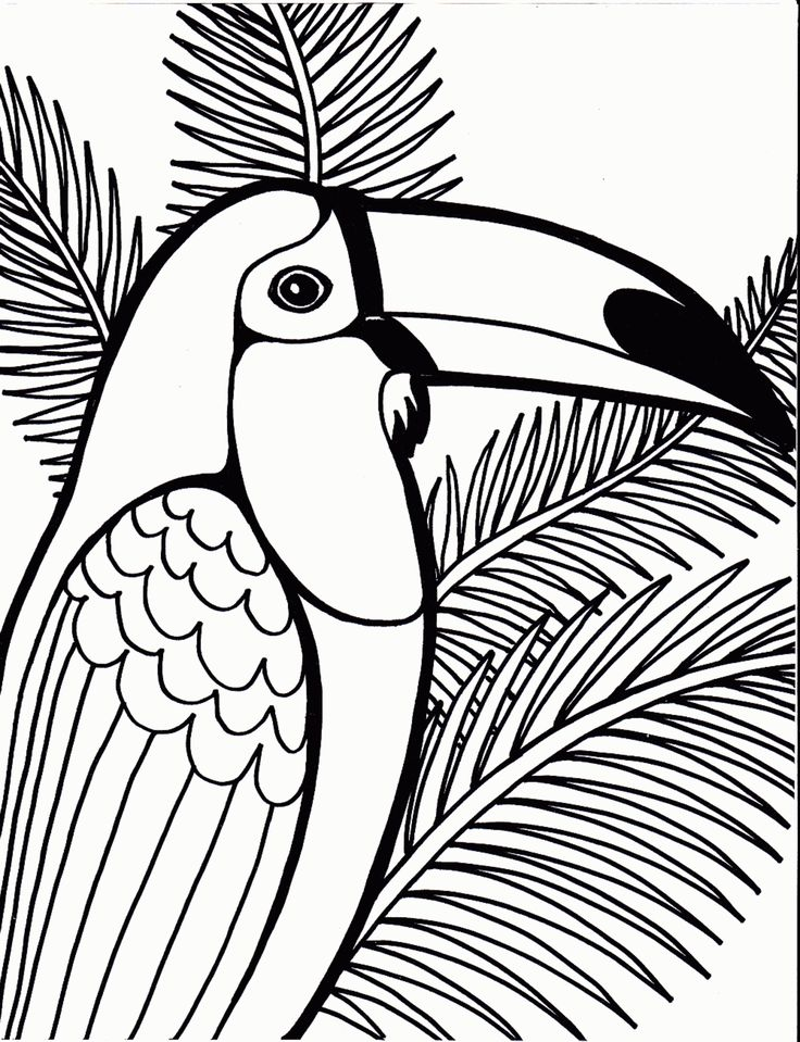 best images about coloring pages birds on pinterest