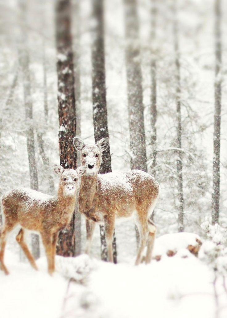 Absolutely Beautiful Winter