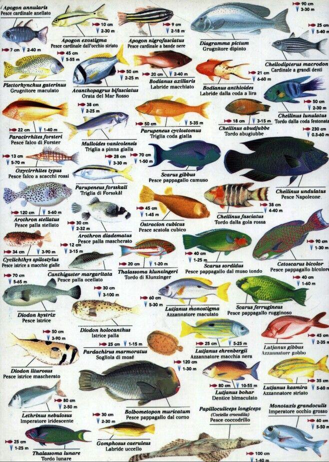 Indian Ocean fish Fish Pinterest