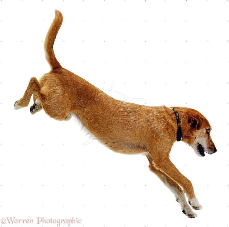 how to get a dog to stop jumping on counters