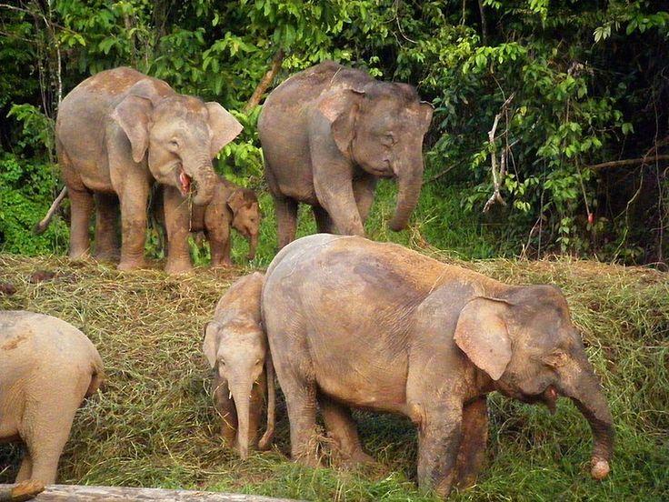 Borneo Rainforest Animals Borneo Rainforest, Malaysia