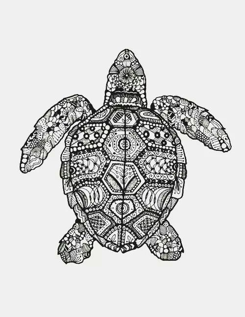 1044 Best Images About Sea Turtle Art On Pinterest