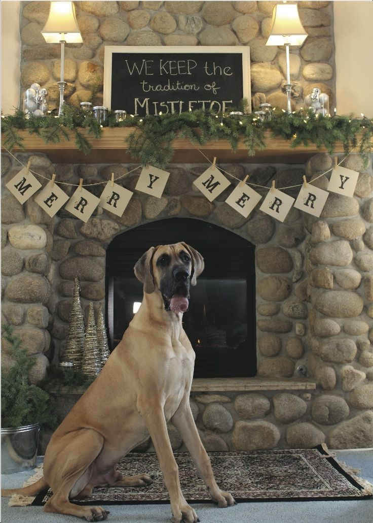 17 Best Images About 2013 Great Dane Holiday Cards On