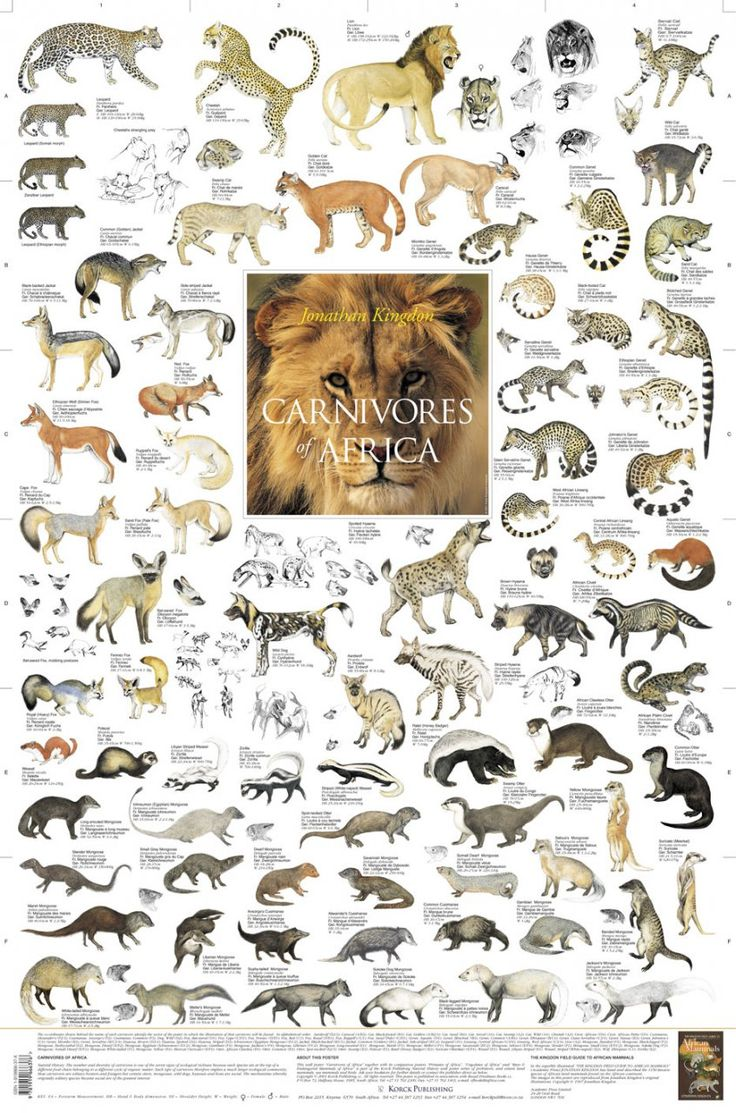 East African Mammals Poster Carnivore Animal List