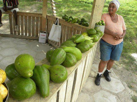 Aguacate Sureo Mmmmm Ricos Saben A Mantequilla AL