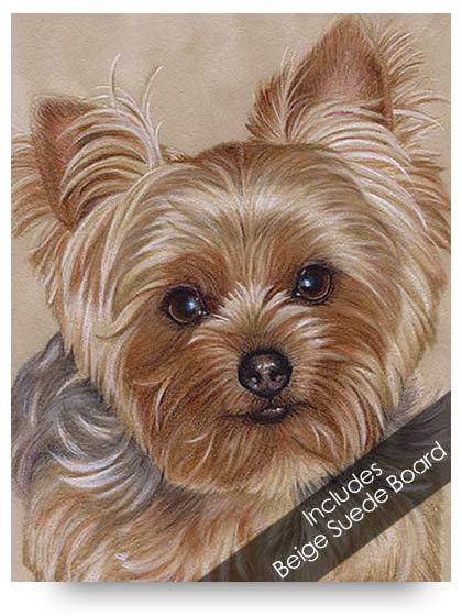 Yorkie Colored Pencil Project Kit Search Love This And