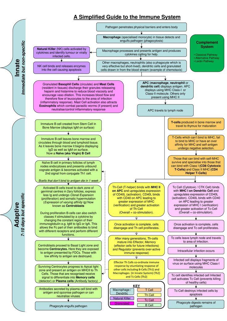 Immune System Flowchart Nursing Pinterest Flowchart