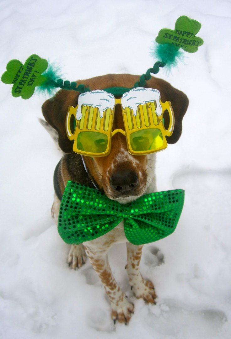 216 Best Images About St Patrick S Day Pets On Pinterest