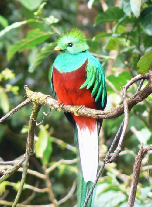 Exotic Birds Rainforest guatemala costa rica