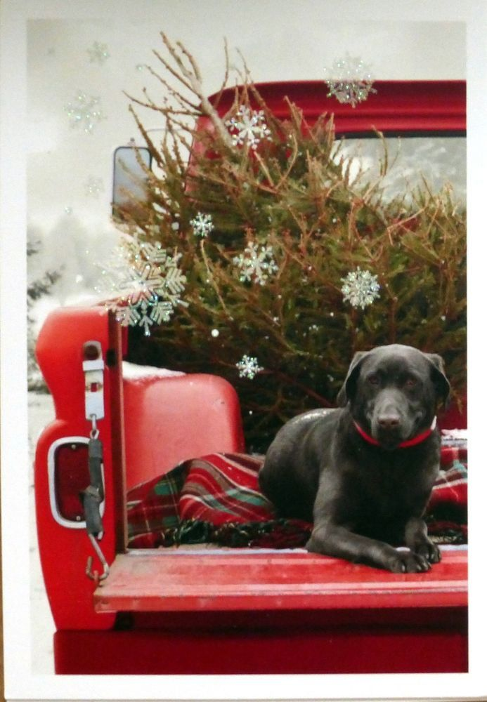10 BLACK LABRADOR RETRIEVER LAB Dog In Red Pickup Truck