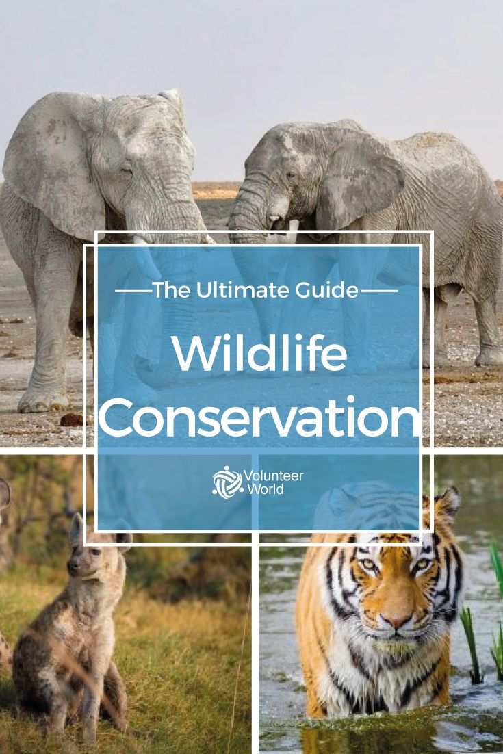 Volunteer in Wildlife Conservation • Ethical Projects