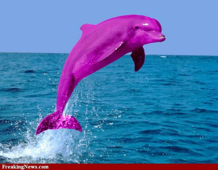 dolphins pink dolphin and purple on pinterest