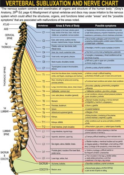 Nerves and your spinegreat cheat sheet for work! Cool