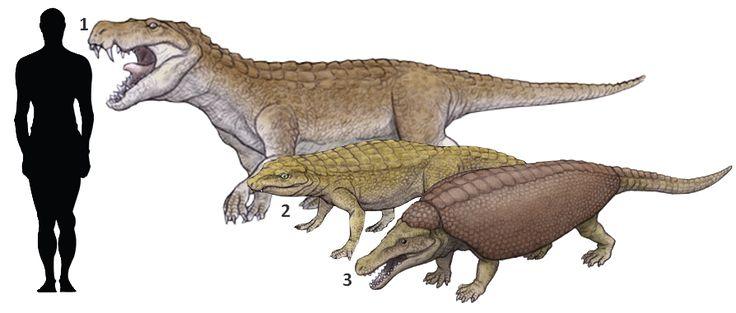 1Baurusuchus Albertoi 2Notosuchus Terrestris 3