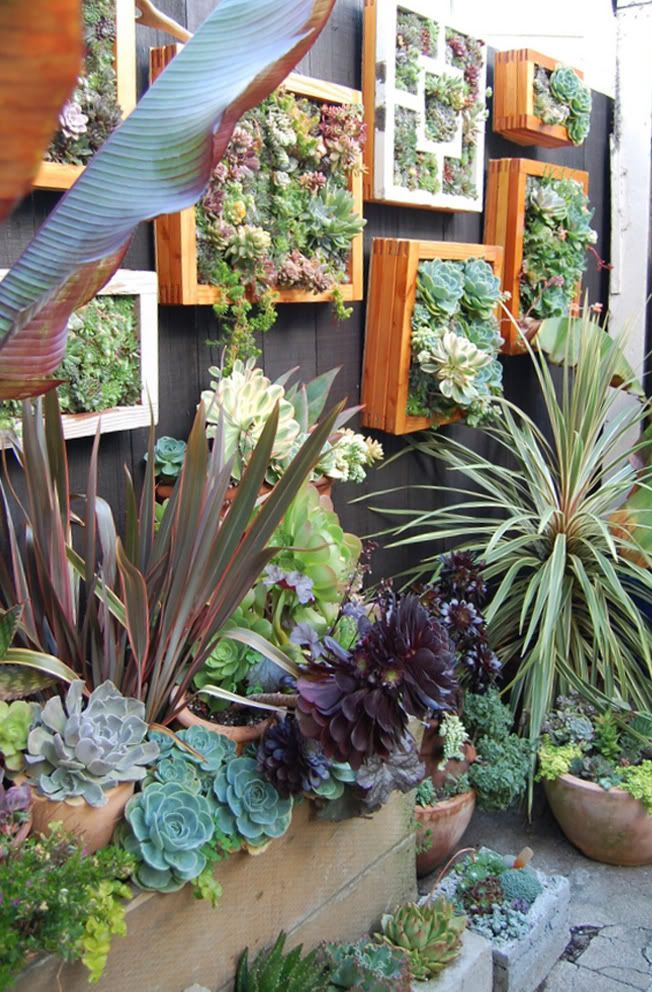I love succulents and cannot wait to try and see how they do in our climate. small space vertical garden wall–love the vertical