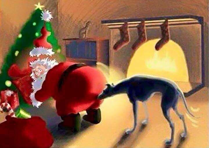 159 Best Images About Greyhound Christmas On Pinterest