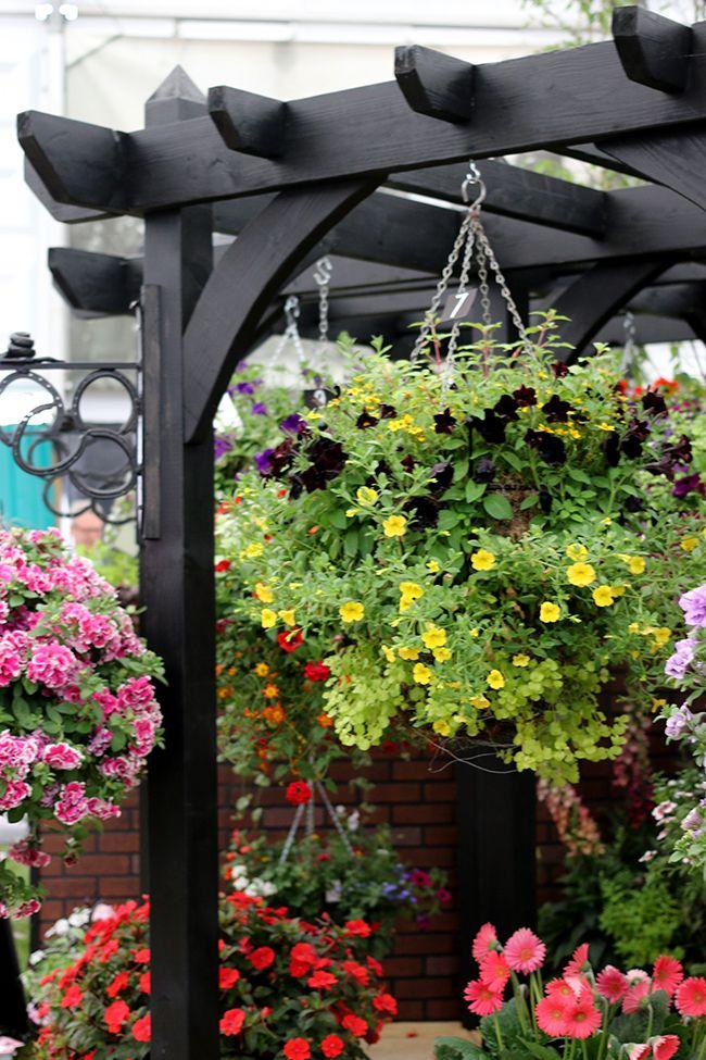A Day Of Flowers With Oka Black Pergola And Pergolas