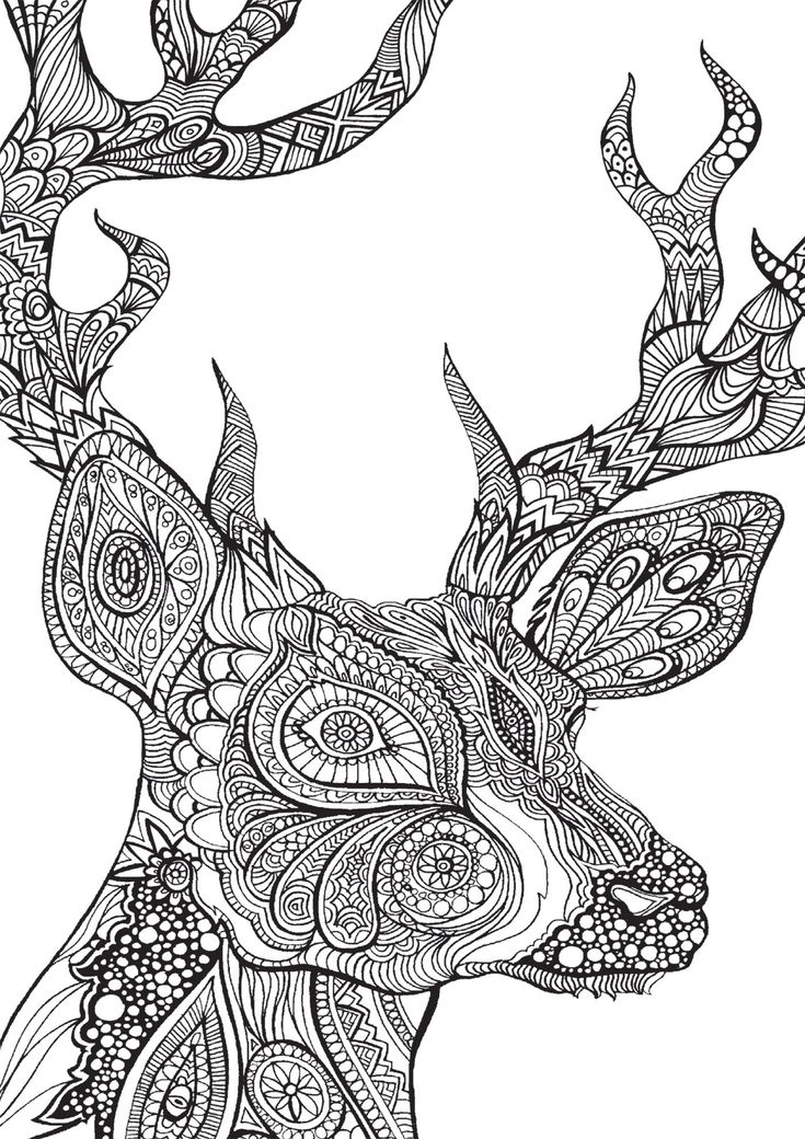 elephant coloring book pages additionally butterfly flower coloring