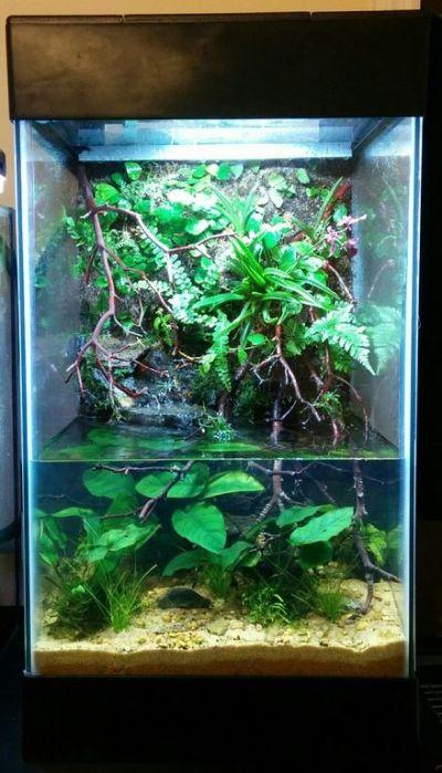 15 Gallon Paludarium. : PlantedTank | indoor aquatic ...