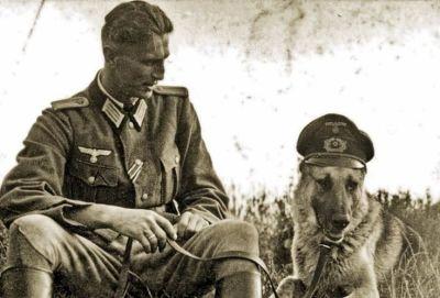 Risultati immagini per ovejero aleman en la segunda guerra mundial