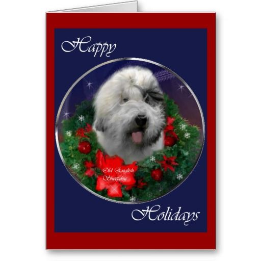 1000 Images About Old English Sheepdog Christmas Cards On